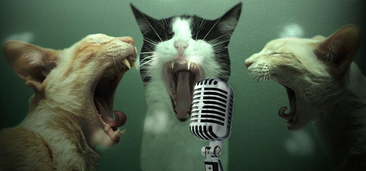cat-karaoke