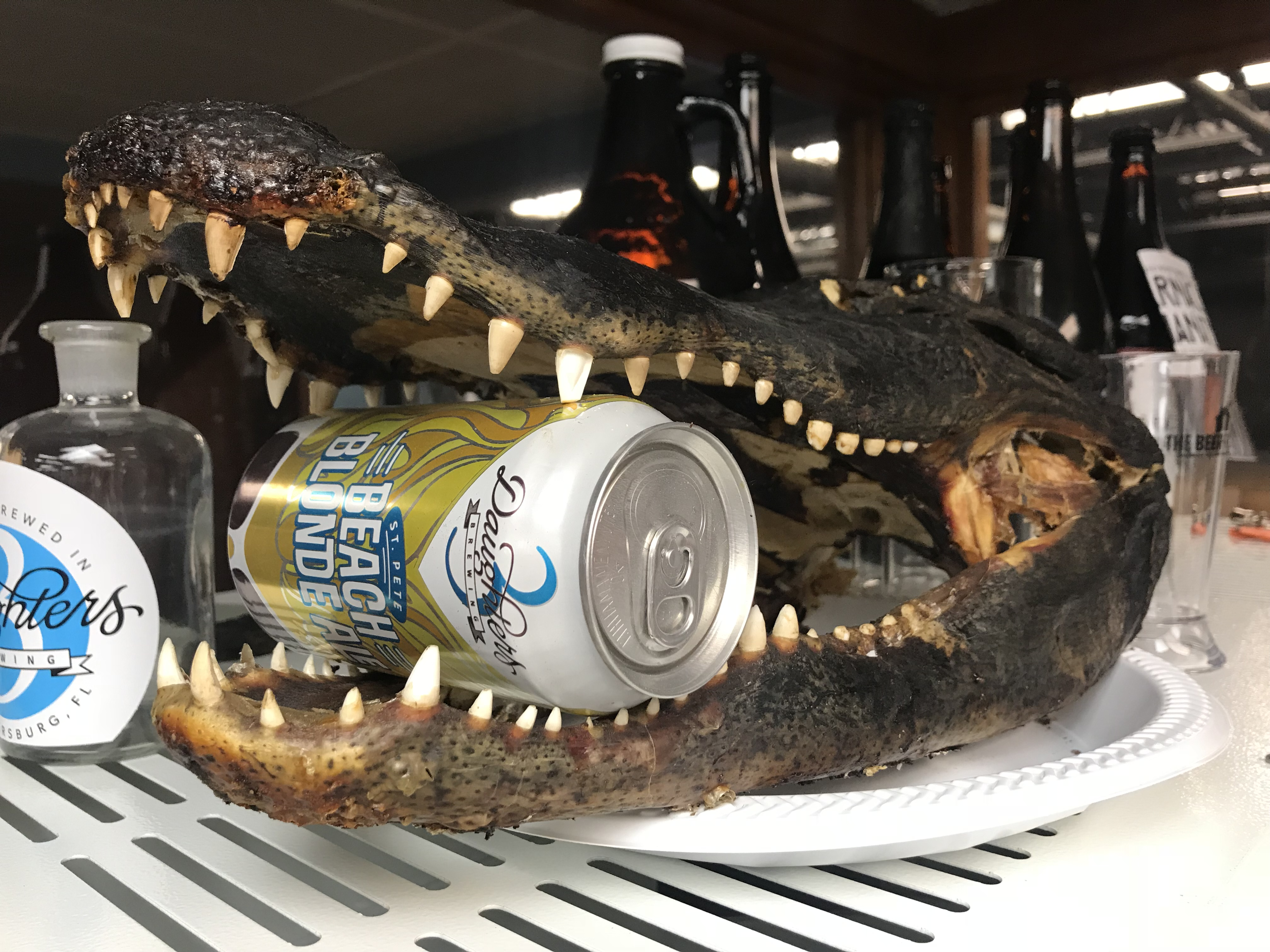 Gator in the beer lab