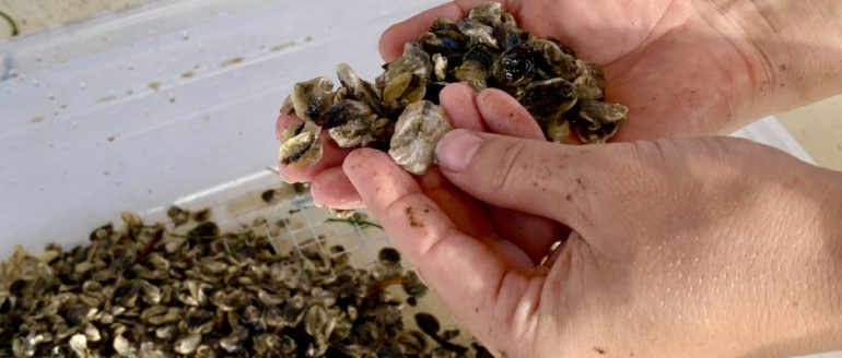 Loco for Local: Lost Coast Oysters Bringing Lost Coast Locos to St Pete